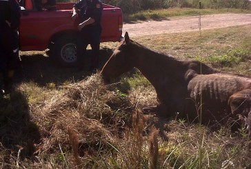 Miembros de la policía local y bomberos rescatan un caballo robado de morir ahogado