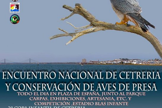 XI Encuentro Nacional de Cetrería y Conservación de Aves de Presa